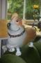 Folien-Ballon-Airwalker-Hund